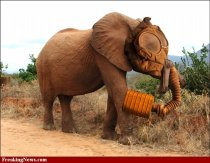 Elephant-Gas-Mask--37456