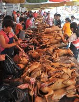 dog-meat-5_1535667a