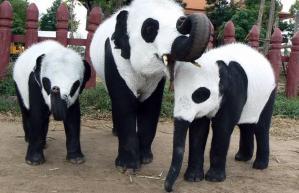 panda-elephants_1472601i