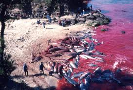 Slaughtering dolphins in Taiji, Japan