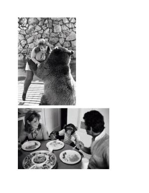 pat bear