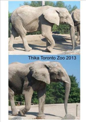 healthy thika
