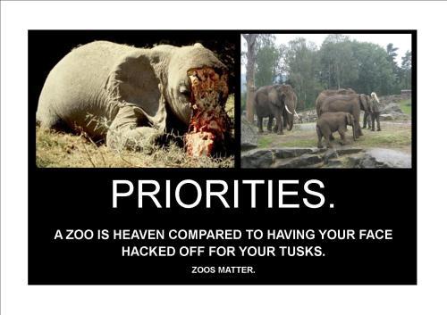 zoos matter